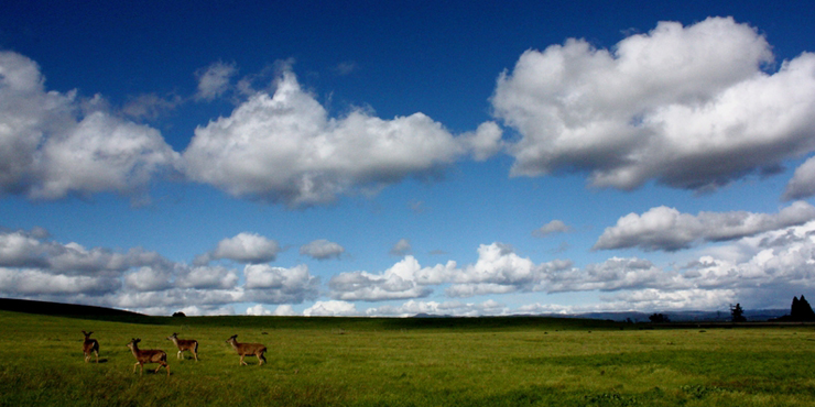 meadow with deer and white puffy clouds in the blue sky